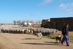 Despedida de los pastores de Guadalaviar